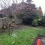 The frontyard before an ArtiGrass Landscaping makeover